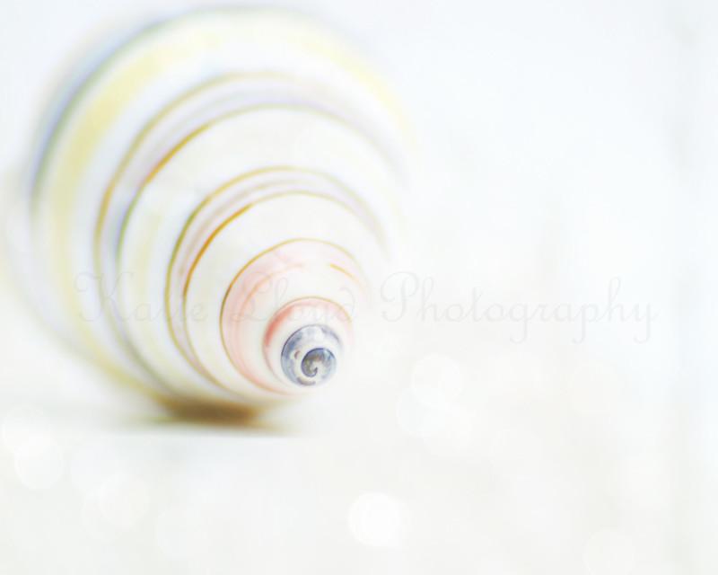 Spiral-shell---8x10---wm