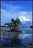 Reflections 3 (peakdot) Tags: landscape pcc imag 1116 pipho pinoykodakero ycap garbongbisaya
