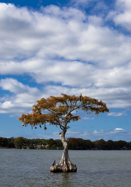 12-01-Floating-Tree
