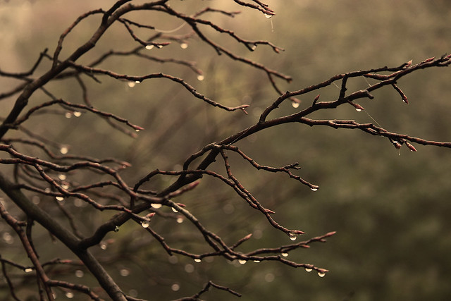 wet branches-sepia filter