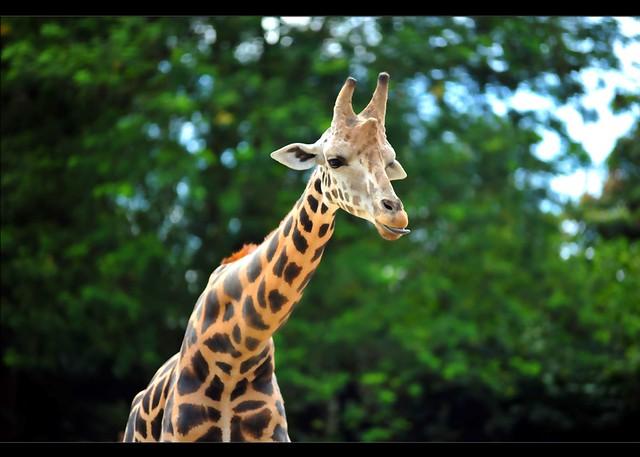 Zoo Taiping 77