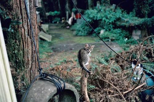 這裡的貓,都用天然的東西