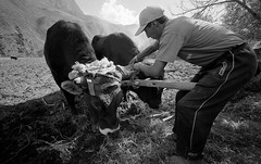 37 (Life on Film) Tags: leica blackandwhite peru southamerica cuzco cusco photojournalism m42 andes urubamba ollantaytambo indigenouspeople quechua andesmountains peruvians documentaryphotography patacancha kelqanqa