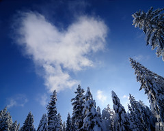 winter love (gregor H) Tags: trees winter sky cloud snow cold tree love nature clouds austria heart symbol mother valentine lookingup shape coincidence valentinesday gettyimages symbolism saintvalentine vorarlberg coldheart winterlove winterforest bödele bemyflickrvalentine twittertuesday