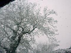 Snowy tree (Julie70 Joyoflife) Tags: winter snow london photo unitedkingdom hiver lewisham londres angleterre snowing neige 2010 julie70 copyrightjkertesz havazik ninge photojuliekertesz ilneige photojulie70