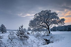 "winterscape (D.Reichardt) Tags: winter sunset snow tree nature creek germany landscape evening europe day filter nd cokin notherngermany ""flickraward regionwide mygearandmepremium"