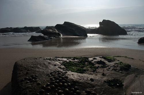 Os moluscos têm uma vista incrivel :)