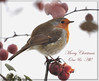 Christmas Robin (wryneck94) Tags: christmas winter robin wildlife crabappletree wildbirds qualitygold