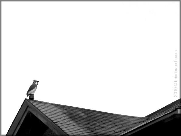 P1130124_owl