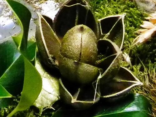 Fleur en coques de paulownia 018b