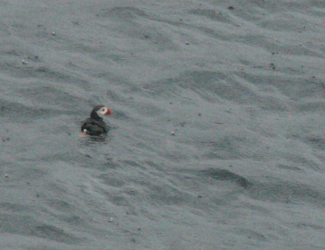 IMG_4822 puffin at nordkapp