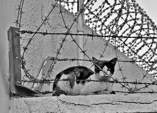 BW Wire Cat