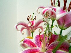 (GreeceColor) Tags: pink flowers texture love colors beautiful lilies lovely picnik
