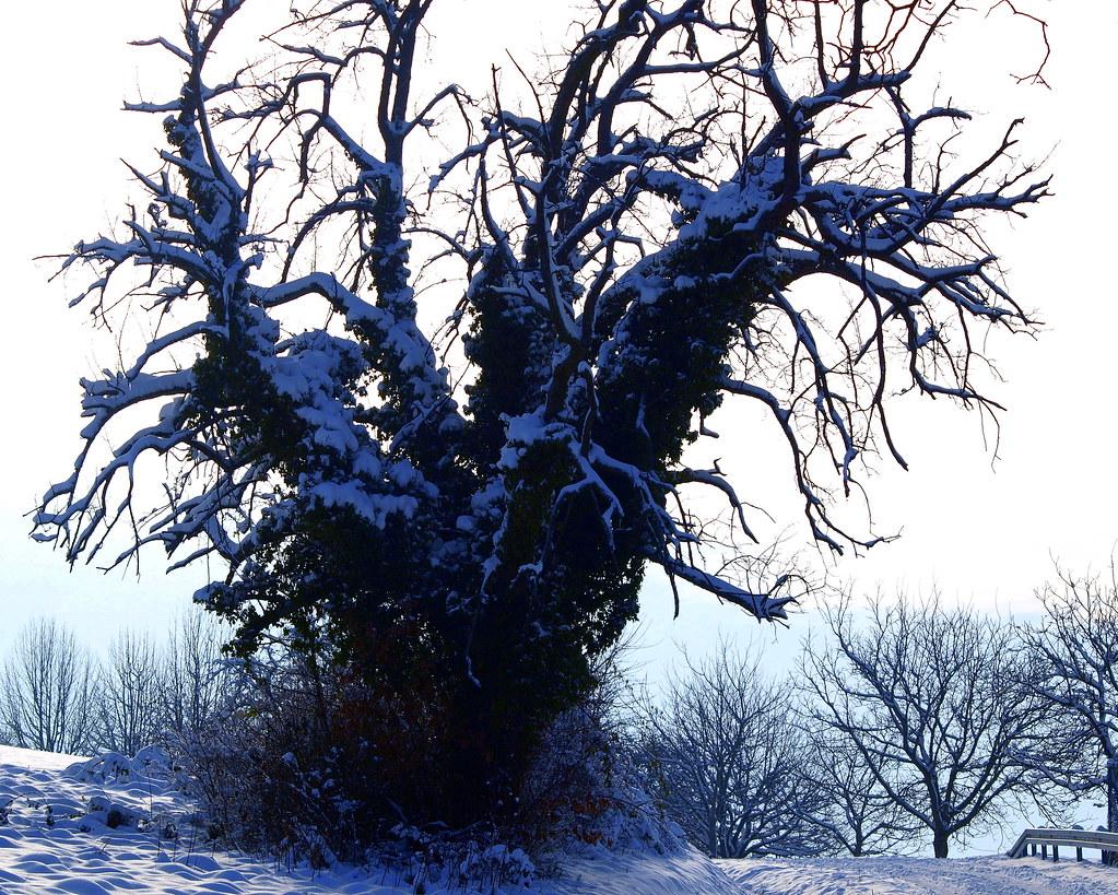 Des Winters grimmiges Antlitz