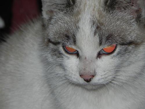 The terminator cat