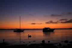 Happy New Bert (pominoz) Tags: lake reflection bird sunrise boats bert pelican nsw macquarie wangi wangiwangi
