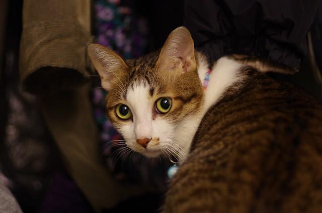 初體驗_我家的貓寶貝