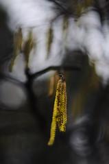 Inverno 2011 Trittico (2) (SteDigit) Tags: winter nikon hiver inverno pistoia uggia stedigit casaalvento