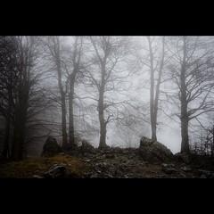 (Vincenzo D'Ortenzio) Tags: nebbia abruzzo vincenzodortenzio pianteealberidoc thedoortenzios