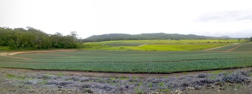 Pineapple Farm, Huon Road, Yandina Creek