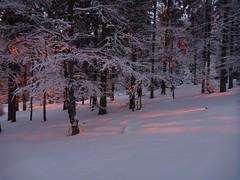 P1010182 (spalti) Tags: schnee winter snowshoeing bayerischerwald lusen schneeschuhwandern