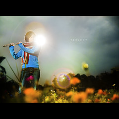 136/365 Fervent (brandonhuang) Tags: flowers music orange plants sun plant flower color colour green colors girl leaves stand leaf saturated colorful colours bright vibrant flames flute flame saturation instrument flare vegetation colourful flutist strobe saturate flautist strobist brandonhuang