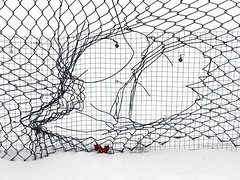 high security? (marianna armata) Tags: winter brown white snow canada black fence see leaf wire montréal mesh quebec screen panasonic chain through friday fenced linked lumixg1 mariannaarmata