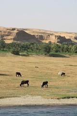 Village - Egypt (LeszekZadlo) Tags: travel viaje naturaleza nature landscape countryside sand village natureza natura paisaje egipto landschaft gypten egitto egypte viajar  egipt    pajsaye
