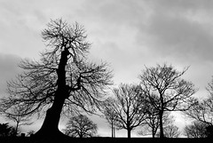 Landscape (pallab seth) Tags: park uk travel winter sky people blackandwhite cloud man tree slr london nature silhouette digital landscape photography evening nikon europe candid greenwich eu traveling dslr greenwichpark londonist greaterlondon nikon1855mmf3556gafsdxvr d3100 nikond3100 grumpygreenwichsky