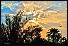 palm tree (Highers,) Tags: light cloud sun tree ray sony palm kuwait dslr hdr       highers