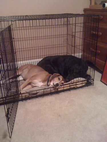 Lovey Dovey Dogs