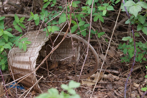 Forgotten basket