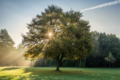 Between light and shadow (Sebo23) Tags: light licht lightbeam sunrise sunstar sonnenstrahlen schatten contrast kontrast güttingen tree baum canon6d canon24704l