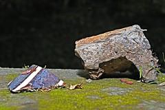Stillleben an der Pader 8 (DianaFE) Tags: dianafe dianae stillleben mll makro abfall mllkunst tiefenschrfe schrfentiefe