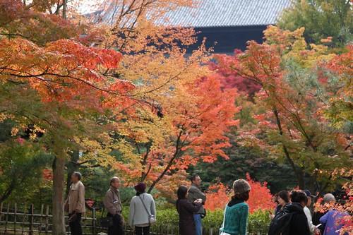 東福寺の秋