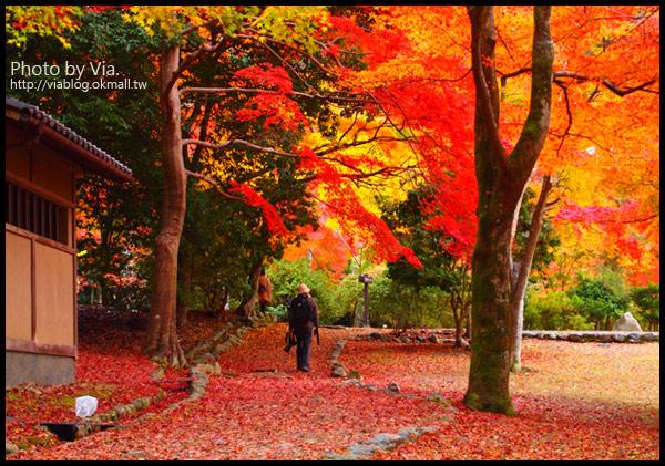 【京阪神自由行】關西賞楓懶人包!大阪、京都、奈良|Via的紅葉美景全記錄♥ (目前收集28個,持續更新中)7-3