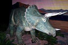 2005: The National Dinosaur Museum, Canberra #9 (dominotic) Tags: 2005 history museum dinosaur skin australia bones canberra act palaeontology prehistory dinosaurbones australiancapitolterritory nationaldinosaurmuseum prehistoricanimal historyoflife prehistoricfossilmaterial