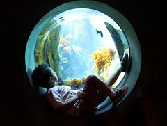 My best of 2010 (Explored) (voo_doolady) Tags: ocean life california fish water glass aquarium losangeles marine tank d free tshirt son sealife center science exhibition explore aerosmith admission ecosystems landandsea explored my