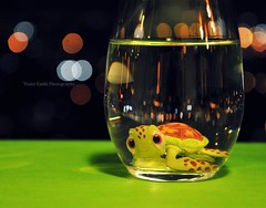 Swimming with bokeh (Violet Kashi) Tags: sea green water glass night movie photography lights dof little bokeh turtle disney explore pixar squirt frontpage hmm findingnemo refractions צילום macromondays