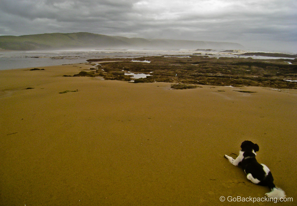 Dog on South Africa's Wild Coast