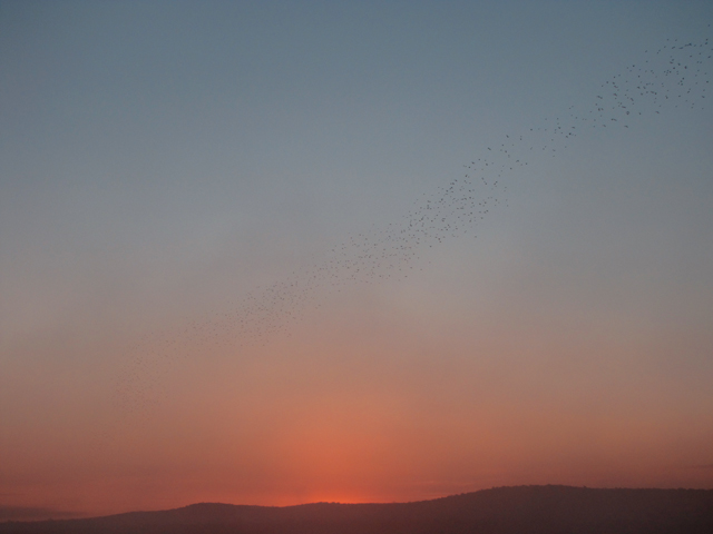 Sunrise with birds