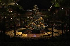 Christmas Tree From Behind (John Frattura) Tags: christmas wallpaper philadelphia highresolution pennsylvania christmastree christmaslights longwoodgardens longwood highres qqqq kennettsquare 5184x3456
