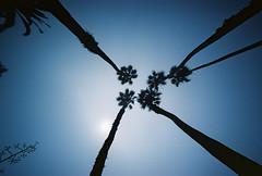 Palmtreeitis (@fotodudenz) Tags: california santa usa us los angeles united voigtlander bessa wide monica l states 12mm ultra 2010 heliar usa2010