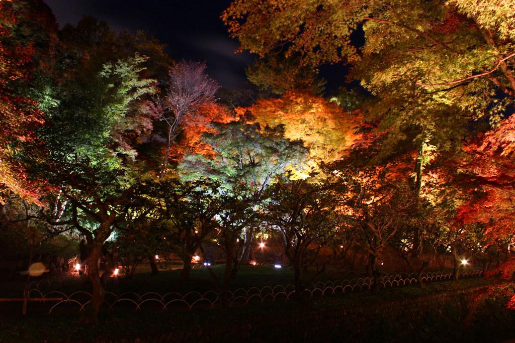Kitanotenmangu Red Leaf Lightup 2010 (6)