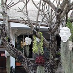 Chiang Rai - Wat Rong Khun (The White Temple) Plaster heads in a tree thumbnail