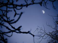 Nocturna? (Pedro Herrero) Tags: madrid blue moon halloween azul night digital noche fear olympus luna scream nocturna retiro zuiko miedo 520 40150 e520