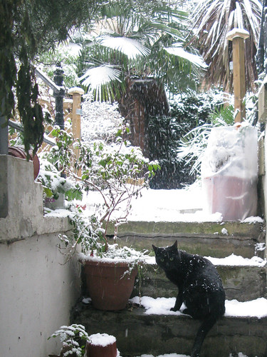 Snowy garden + Black Cat