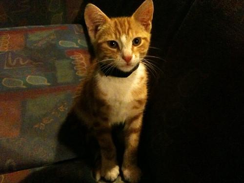YHAハブロックの飼い猫がかわいすぎる。