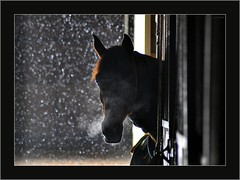 Sanctuary II (Images by A.J.) Tags: winter horses horse snow silhouette barn cheval dof cross bokeh snowy steam arab stable equestrian thoroughbred equine gelding trakener lpbokeh2