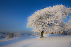 Winter White (PeterYoung1) Tags: wow1 wow2 wow3 wow4 wow5 wowhalloffame the4elements